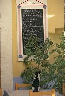 レストランのメニューを見る猫