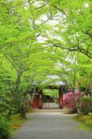京都府 新緑の常照寺参道と吉野門