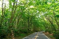 鳥取県 江府町 大山ぶな林