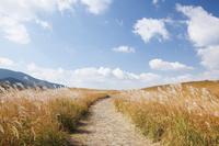 奈良県 ススキ揺れる秋の曽爾高原