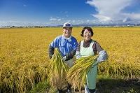 稲穂を抱える農家の夫婦