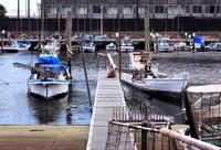 千葉県 船橋漁港 貝漁具 鋤簾(じょれん)