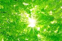 北海道 新緑の森と木漏れ日