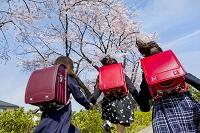 桜の咲く道を走る新一年生の後ろ姿