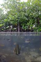 パラオ パラオ水族館の屋外水槽