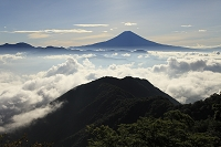 静岡県 バラの段 富士山と雲海の山並み
