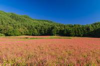 長野県 赤そばの里