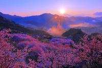 高知県 雪割桜
