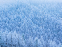 長野県 霧ヶ峰の霧氷