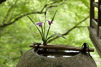 愛媛県 手水鉢とランの花