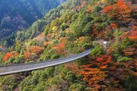 熊本県 梅の木轟公園吊橋