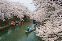 岐阜県 春の水門川