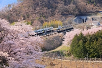 山梨県 桜咲く山間を行き交う特急電車と普通電車