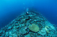 パプアニューギニア ケビエン サンゴ礁のイメージ