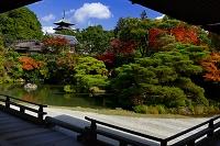 京都府 仁和寺 庭園