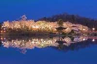 広島県 桜の上野公園の夕景