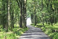 神奈川県 相模原中央緑地 木もれびの森
