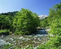 山形県 新緑の梅花皮沢と飯豊連峰