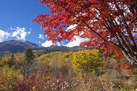 長野県 乗鞍高原の紅葉