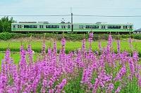 新潟県 白新線