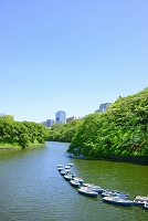 東京都 千鳥ヶ淵の新緑とビル群