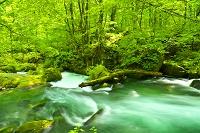 青森県 奥入瀬阿修羅の流れ