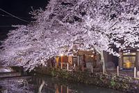 兵庫県 豊岡市 城崎温泉 夜桜
