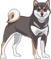 犬 柴犬 黒