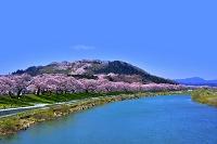 宮城県 白石川堤と一目千本桜
