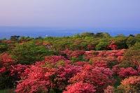 栃木県 八幡のツツジ園地朝景 那須高原