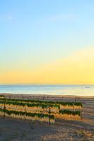 神奈川県 三浦海岸の大根干しと朝焼け空