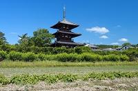 奈良県 斑鳩の里と法起寺三重塔