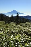 静岡県 山伏岳 富士山と山並み