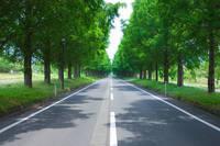 滋賀県 メタセコイア 並木道