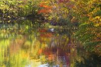 岩手県 八幡平の五葉沼