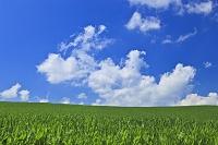 北海道 青空と雲