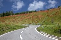 美ヶ原の道路とレンゲツツジ群落