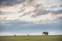 ケニア ライキピア  象