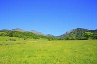 山梨県 八ヶ岳牧場 新緑の八ヶ岳と青空
