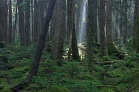 長野県 原生林
