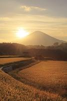 静岡県 小山町 富士山と夕日に染まる稲田