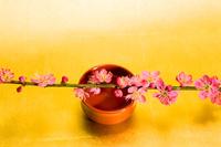 酒と梅の花