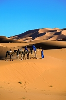 モロッコ サハラのツアー ラクダ