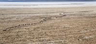 エチオピア ラクダの行列