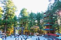 栃木県 日光東照宮の五重の塔と石鳥居