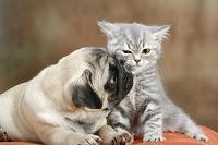 寄り添う子猫と子犬