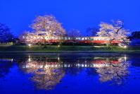 千葉県 桜のライトアップと小湊鉄道