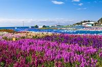 千葉県 花畑