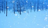 北海道 雪降る青い池