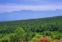 山梨県 美し森のツツジと南アルプス